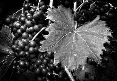 Leaf And Grapes In Black And White Art Print by Greg Mimbs