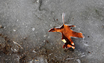 Photograph - Leaf And Melting Ice by Mary Bedy