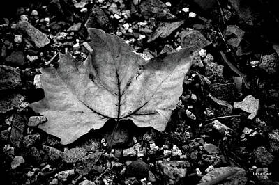 Photograph - Leaf And Pebbles Bw by Lesa Fine