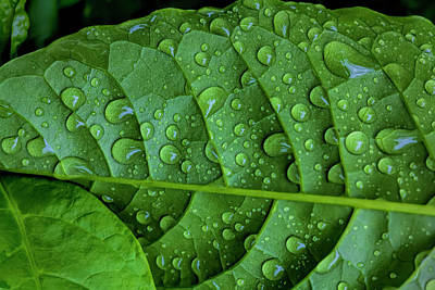 Photograph - Leaf And Raindrops by Robert Ullmann