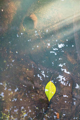 Photograph - Leaf And Rock In Pond by Mary Lee Dereske