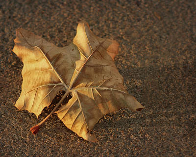 Photograph - Leaf And Shadow by Nikolyn McDonald