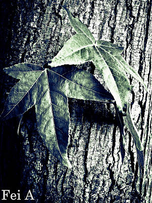 Photograph - Leaf And Tree Trunk by Fei Alexander
