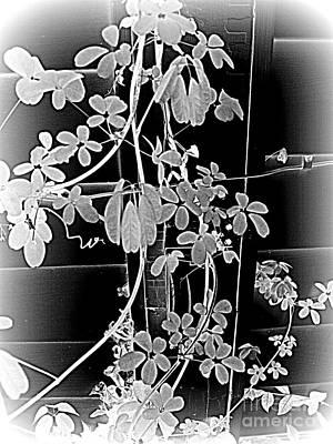 Photograph - Leaf And Vine by Nancy Kane Chapman