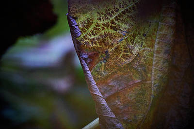 Photograph - Leaf by Andreas Gerden