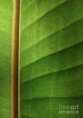 Beach Photograph - Leaf Art - Abstract  by Prar Kulasekara