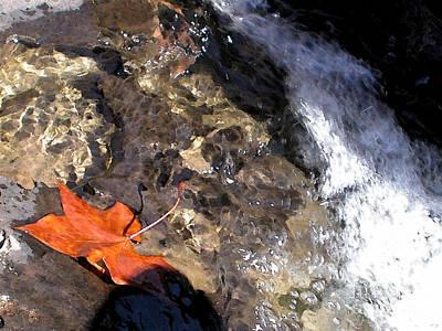 Leaf At Richland Creek Print by Steve Grisham