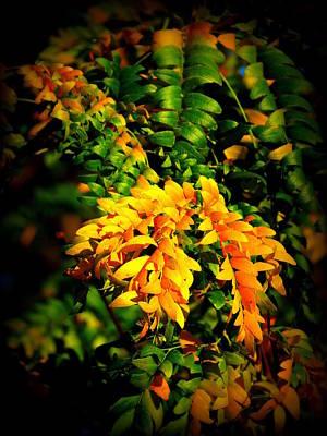 Leaf Bouquet 17 Art Print