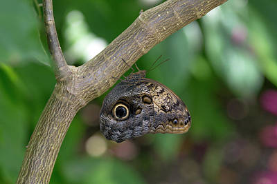 Photograph - Leaf Butterfly by Vanessa Valdes