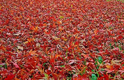 Photograph - Leaf Carpet by Nareeta Martin