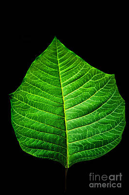 Photograph - Leaf by Charuhas Images
