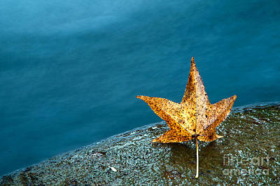 Water Fall Photograph - Leaf by Chris Mason
