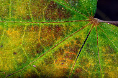 Photograph - Leaf Colors by Larah McElroy