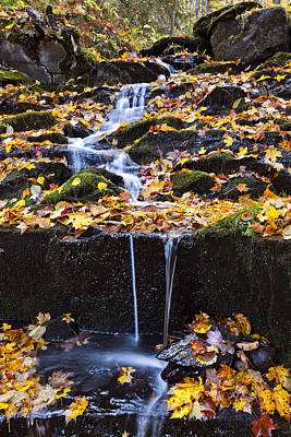 Photograph - Leaf Covered Cascading Brook by Alan L Graham