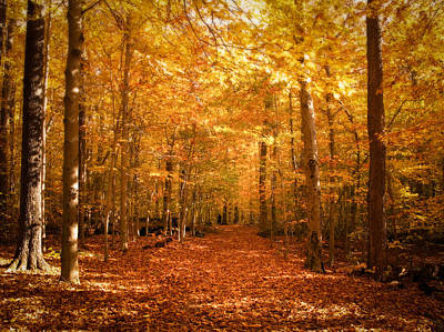 Leaf Covered Pathway In A Golden Forest Art Print by Chantal PhotoPix