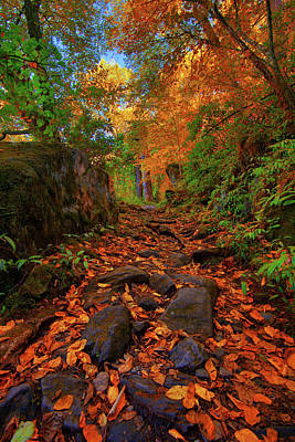 Photograph - Leaf Covered Rocky Trail In Smoky Mountains Tennessee by Justin Kelefas