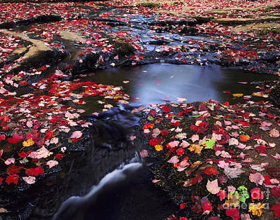 Photograph - Leaf-covered Stream by Willard Clay