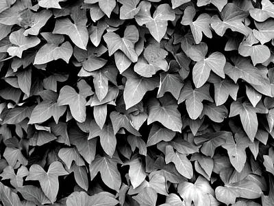 Photograph - Leaf Curtain Black And White by James Granberry