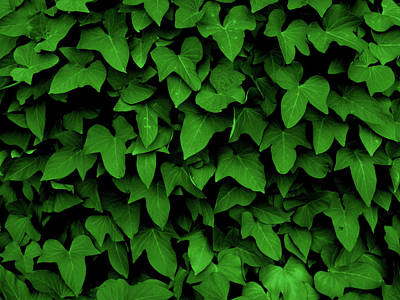 Photograph - Leaf Curtain In Green by James Granberry
