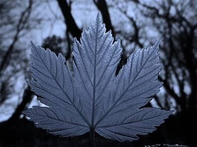 Photograph - Leaf Cyan by Richard Brookes