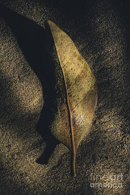 Photograph - Leaf Decaying In The Twilight Of Fall by Jorgo Photography - Wall Art Gallery