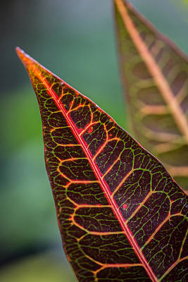 Photograph - Leaf Designs by Dale Kincaid
