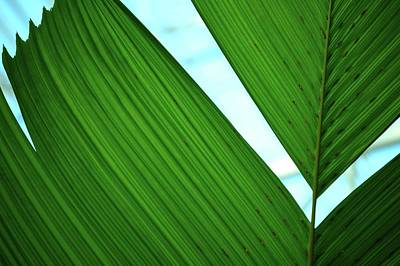 Photograph - Leaf Detail 4 by Jerry Sodorff