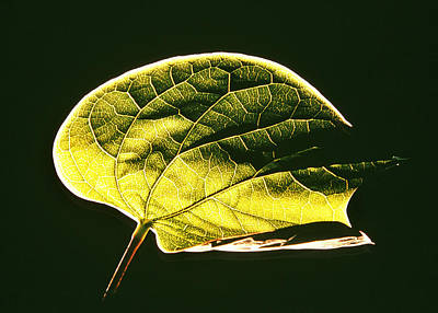 Photograph - Leaf Detail by Gerard Fritz