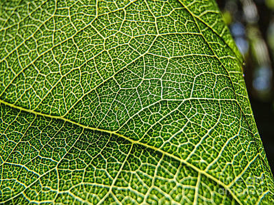Photograph - Leaf Detail by Trena Mara