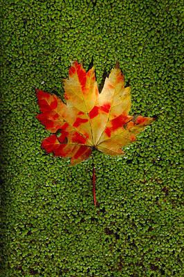 Digital Art - Leaf Floating On Duckweed by Dick Pratt