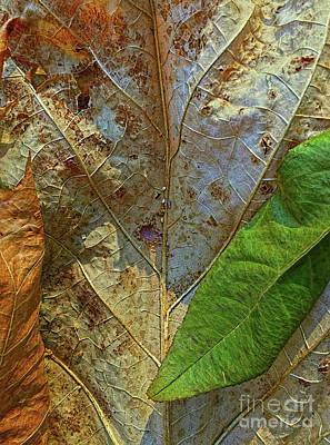 Photograph - Leaf Forest by Todd Breitling