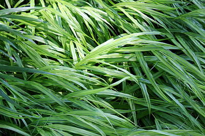 Photograph - Leaf Grasses by Deborah  Crew-Johnson