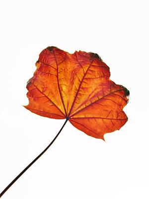 Photograph - Leaf II by Richard Brookes