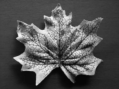 Wall Art - Photograph - Leaf In Black And Whtie by Mary McGrath
