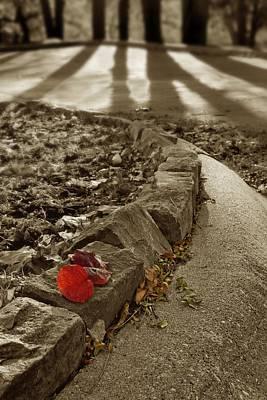 Photograph - Leaf In Light by Nikolyn McDonald