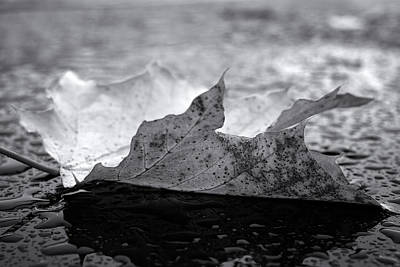 Digital Art - Leaf In Monochrome by Patrick Groleau