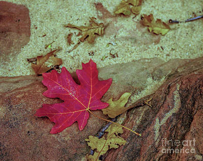Photograph - Leaf In Sand by Roxie Crouch