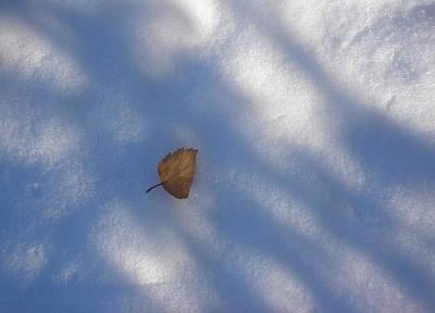Leaf In Shadows Art Print