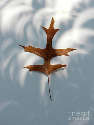 Photograph - Leaf In The Eclipse  by Adam Long