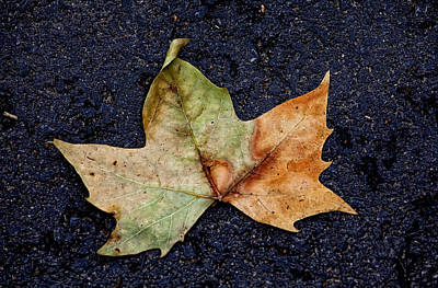 Leaf In The Road Art Print by Robert Ullmann