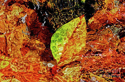 Photograph - Leaf In Water by Paul Mashburn