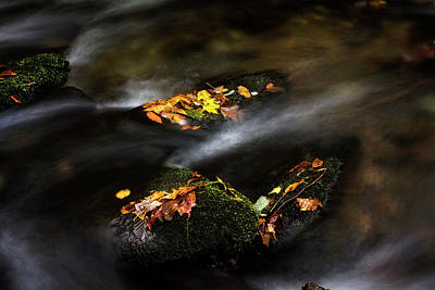 Rock Photograph - Leaf Island by Greg Mimbs