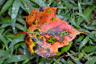 Photograph - Leaf It Be by Lew Davis