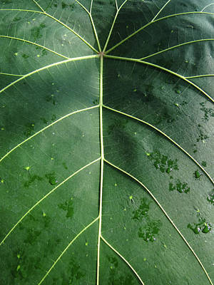 Photograph - Leaf by Julia Wilcox