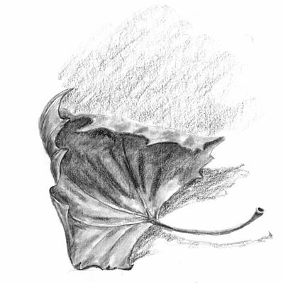 Drawing - Leaf by Kevin Callahan