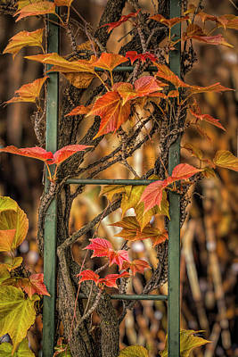 Photograph - Leaf Ladder by Bill Posner