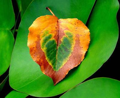 Leaf Leaf Heart Art Print