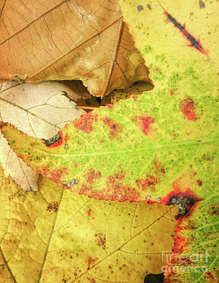 Photograph - Leaf Lines And Colors by Todd Breitling