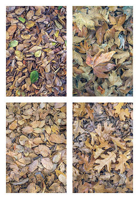 Photograph - Leaf Litter Collage by Alexander Kunz