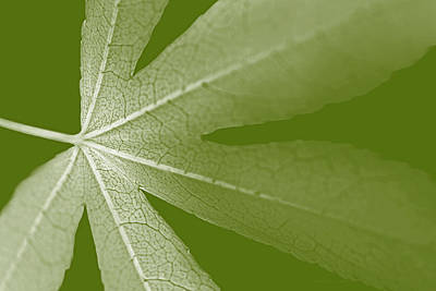 Photograph - Leaf Macro Light Green  by Jennie Marie Schell